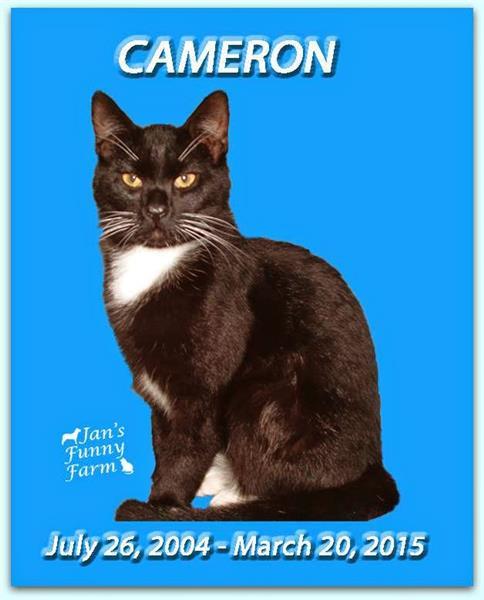 Kind Cameron