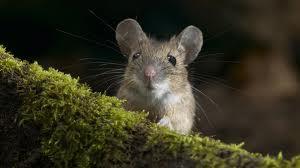 Rat On…