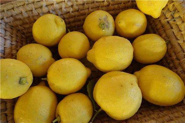 Loulou Does Lemons
