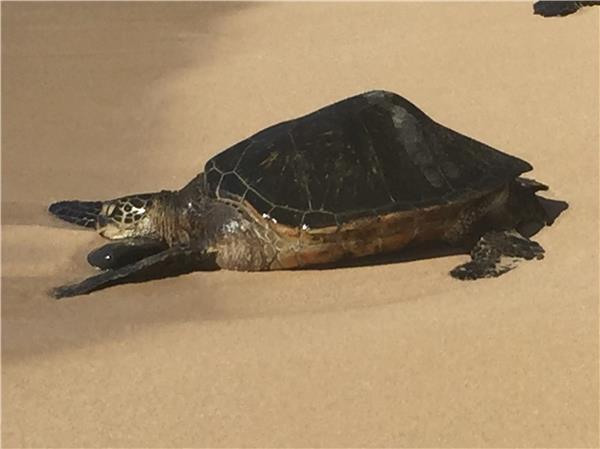 Turtle Trove