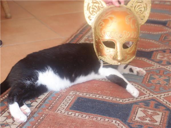 Una Gatta in Maschera
