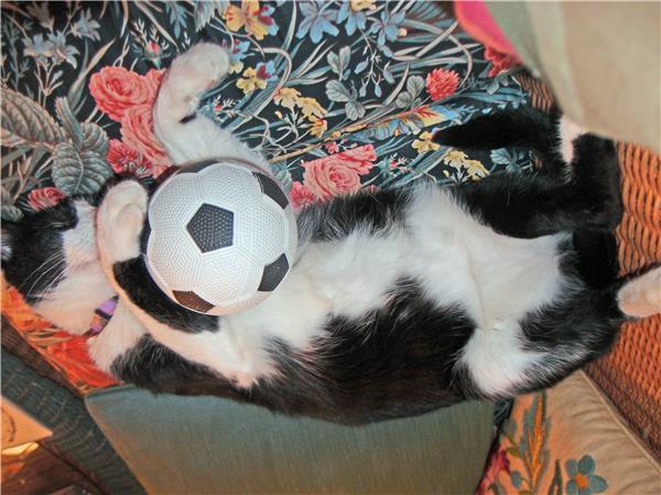 FIFA Foe Fum