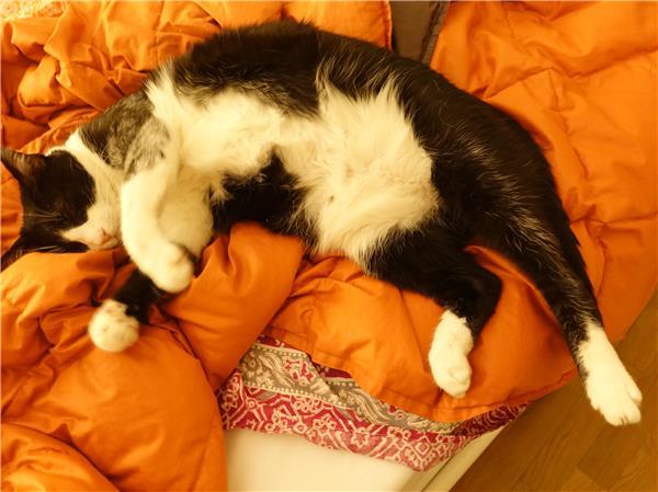 Bed, No Breakfast!