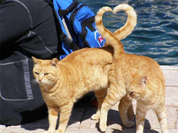 Tails of Love