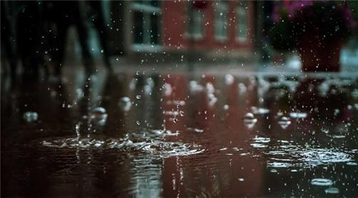 How to Protect a Yard from Moisture and Water Damage